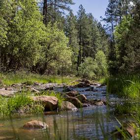 Peaceful. by David Shearer - Landscapes Forests ( stream, waterscape, green leaves, quiet )