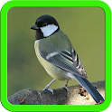 Beautiful Birds Images icon