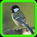 Beautiful Birds Images icon