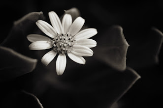 Photo: #floralfriday