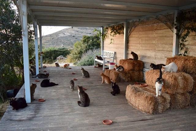 Gatos en el alojamiento.