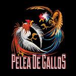 Buena Vista Brewing Co. Pelea De Gallos