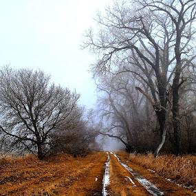 A Road Less Traveled ! by Jan Siemucha - Landscapes Prairies, Meadows & Fields ( grass, fog, snow, path, trees, weeds, road, pwcpaths )