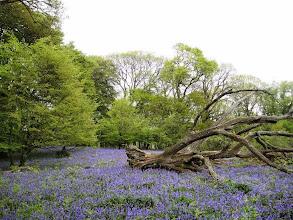 Photo: Bluebells on Exmoor