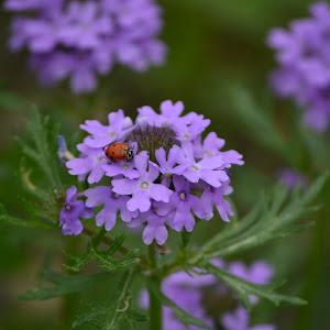 a flowerbug.jpg