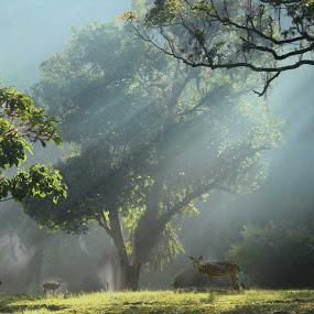 Morning in Situ Gunung by Dedi Sukardi - Digital Art Places ( sukabumi, indonesia, west java, rol, situ gunung, morning )
