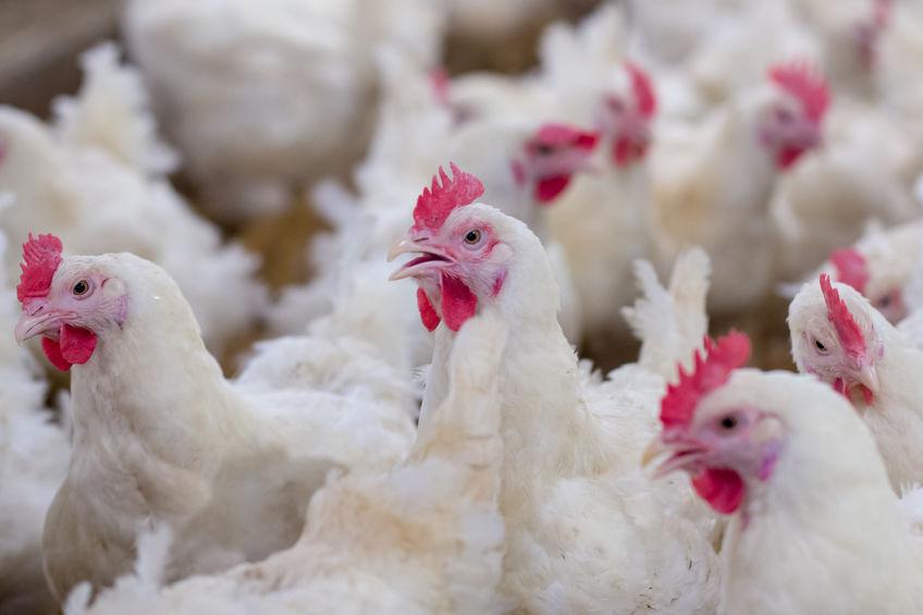 Bird flu outbreak confirmed in SA, Joburg farm quarantined