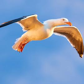 0 Bird 99753~ by Raphael RaCcoon - Animals Birds