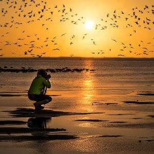 the bird photog.jpg