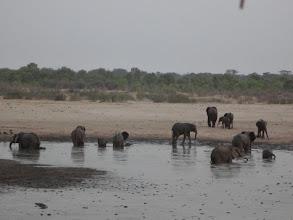 Photo: Elephants having a grand ole time in the waterhole