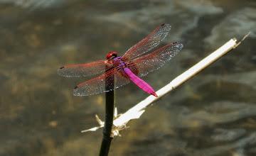 Photo: Deep Purple #WildlifeWednesday  Photography by Justin Hill ©