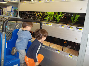 Photo: WE FOUND THE FISH!!!  The boys always love looking at Walmart's fish.  This store's aquarium looked clean and the fish were all alive.