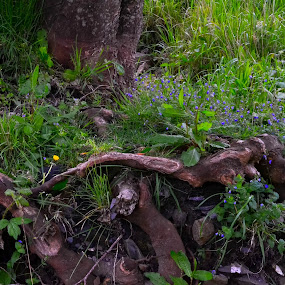 Flowers in the wild by Craig Payne - Flowers Flowers in the Wild ( wild, tree, weeds, flowers, branches )
