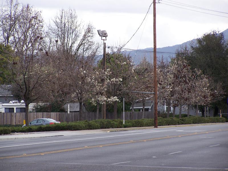 Photo: Pre-Spring tree blooming