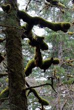 Photo: Moss grows everywhere