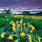 _IMG_1295_Teton Shadow Mtn Wildflowers-Cropped 07132013_300ppi_sRGB.jpg