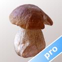 Myco pro - Mushroom Guide icon