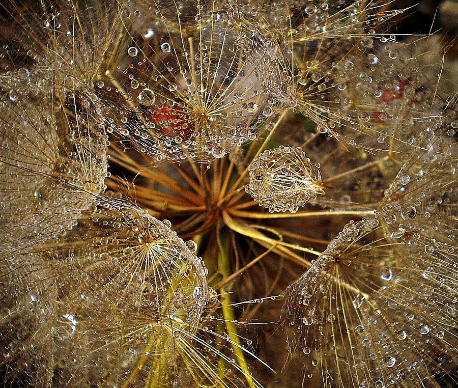 Stop: Beauty by Marija Jilek - Nature Up Close Flowers - 2011-2013 ( field, red, nature, silver, gold, flower,  )