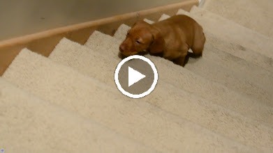 Video: First try coming up the steps. Turn the volume down, so you don't have to listen to my annoying voice. :)