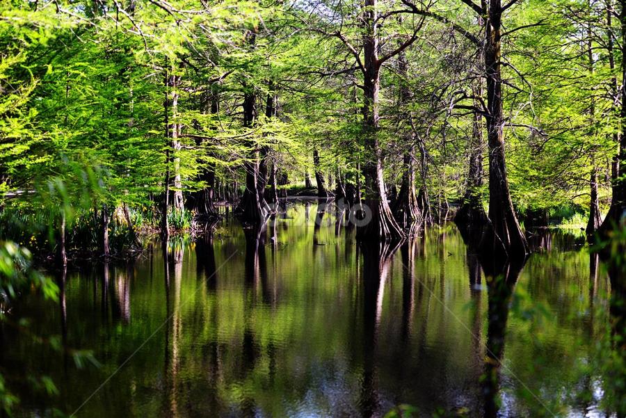 by Jason Bleoo - Landscapes Forests (  )