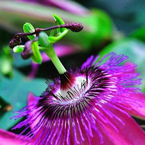 by Miodrag Gran Bata Radosavljevic - Nature Up Close Flowers - 2011-2013