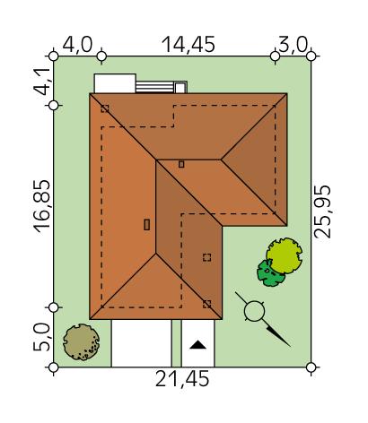 Kiwi (CE) - Sytuacja