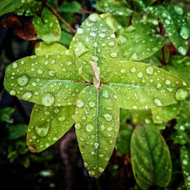 Pure drops by Alina-Maria Negrea - Nature Up Close Water