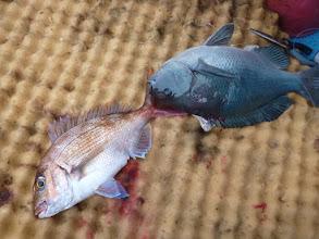 Photo: 真鯛にクチブト!