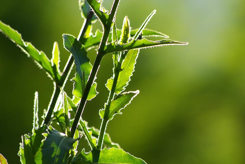 Il verde del controluce  di Danytibu