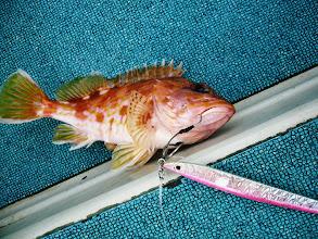 """Photo: 魚だけですが、ヒットジグが「マサムネ」ですのでアングラーは? はい、正解! """"金田さん""""です!"""