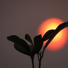 by Sumanta Thakur - Nature Up Close Other Natural Objects