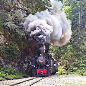mocanita by Lili Screciu - Transportation Trains ( mountains, mocanita, romania, maramures,  )