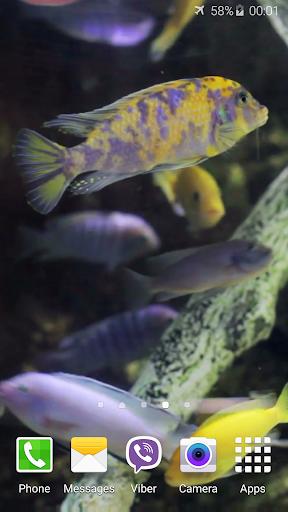 수족관 비디오 라이브 배경 화면