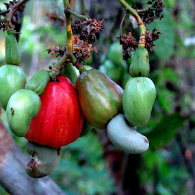 Cashew Apple. One of the best tasting fruits ever! by Nelson Moses - Nature Up Close Other Natural Objects