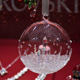 Christmas twinkle by Will McNamee - Public Holidays Christmas ( dld3us@aol.com, gigart@aol.com, aundiram@msn.com, danielmcnamee@comcast.net, mcnamee2169@yahoo.com, ronmead179@comcast.net, , Christmas, card, Santa, Santa Claus, holiday, holidays, season, Advent )