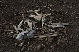 Photo: Deer Bones - 1st in Class - Toned,Tinted & Solarized, 1st in Division and Best of Show