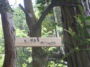 Photo: 「ヒサカキ」