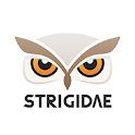Strigidae icon