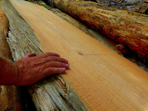 Photo: live edge close with scale