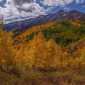 Mt. Nebo by Ramsey Samara - Landscapes Mountains & Hills ( aspens, mt. nebo, autumn, wasatch )