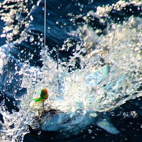 Cabo Fishin by Zoë Jackson - Animals Fish ( water, splash, fish, ocean, fishing )