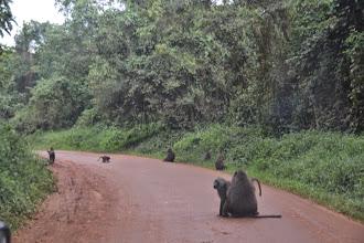 Photo: on the road to Kamwenge
