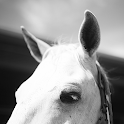 Sweet Horse Wallpapers icon