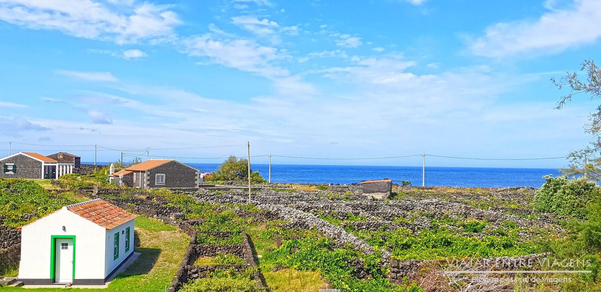 Conhecer a região vinícola dos Biscoitos, na ilha Terceira