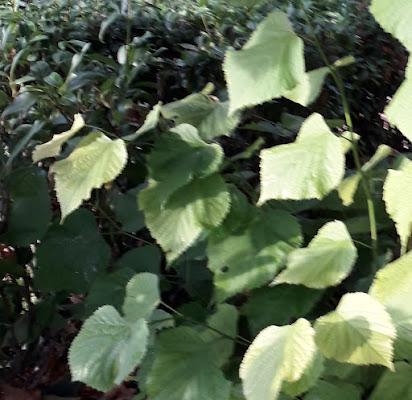 Profondo verde di Click-clack