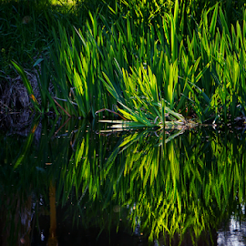 Reflections  by Todd Reynolds - Nature Up Close Leaves & Grasses