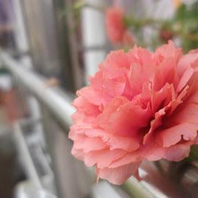 by Karthish Waran - Flowers Single Flower ( single, beautiful, outdoor, steel, flower )