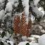 by Pal Mori - Nature Up Close Trees & Bushes