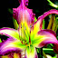 Bloom by Dawn Marie - Flowers Flower Gardens ( lily, green, pink, bloom, stem, garden, floral, flower, blossom,  )