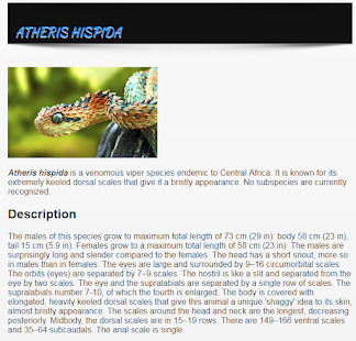 Types Of Snakes - Snake Species - ENGLISH